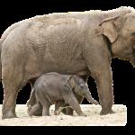 elephant-1049846_640